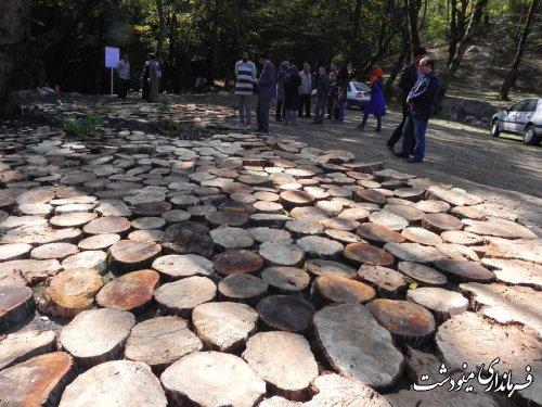 حفظ درختان در کاهش بلایای طبیعی