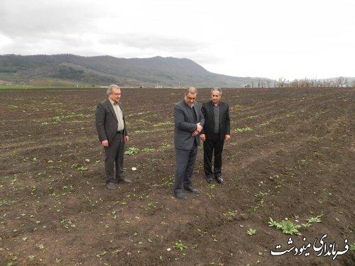 بازدید فرماندار مینودشت  از مزرعه گیاهان داروئی