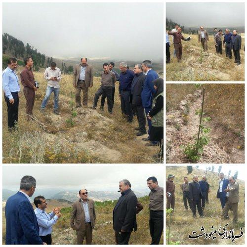 فرماندار مینودشت کاشت درختان مثمر در منابع طبیعی را خواستار شدند.