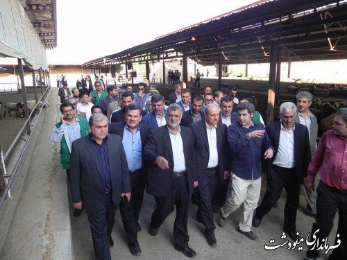 بازدید وزیر جهاد کشاورزی  ، استاندار گلستان از مجتمع دامداری  در شهرستان مینودشت