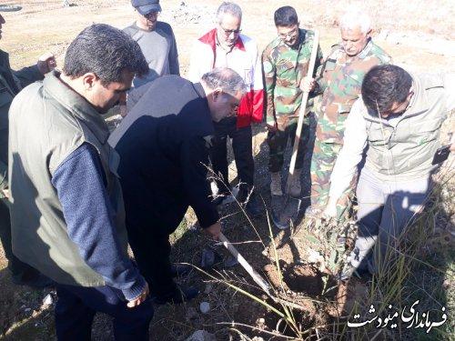 کاشت 10000 درخت در شهرستان مینودشت
